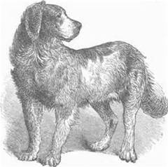 Von B's Dog